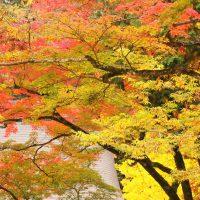 色づいた木々の枝が重なる様子